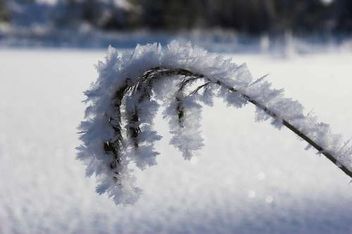 Winter Frost Snowflakes Cold Norway Snow Ice