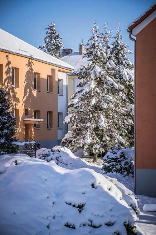 Winter Snow Housing Estate City White Spruce