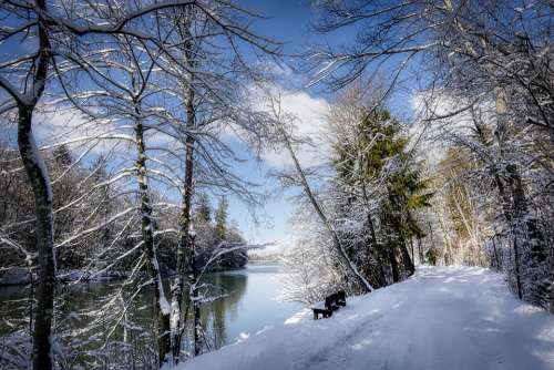 Winter Snow Nature Landscape Wintry Tree Cold