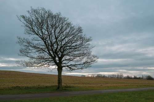 Winter Tree Path Nature Landscape Wintry Sky