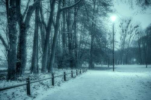 Winter Park Snow The Fog Tree Municipal Night