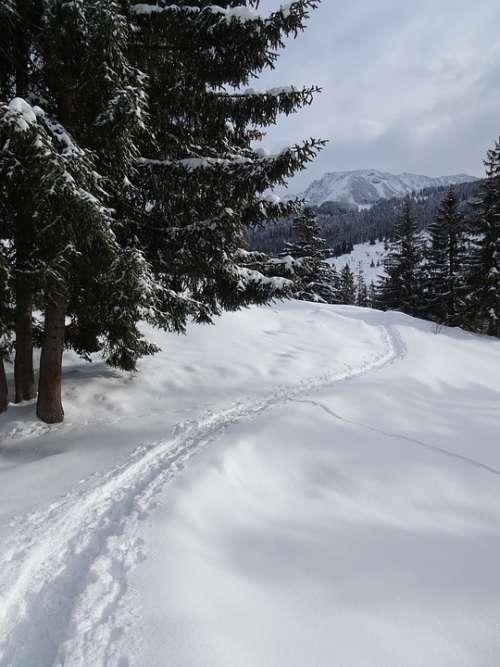 Winter Snow Winterspaziergang Winter Hike Nature