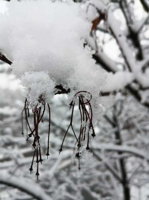 Winter Snow Snowden Cold White