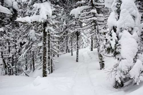 Winter Snow Nature Trail Outdoors Snowy Forest