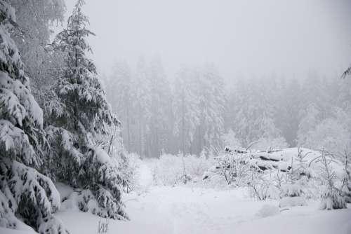 Winter Snow Fir Tree Forest Mountain