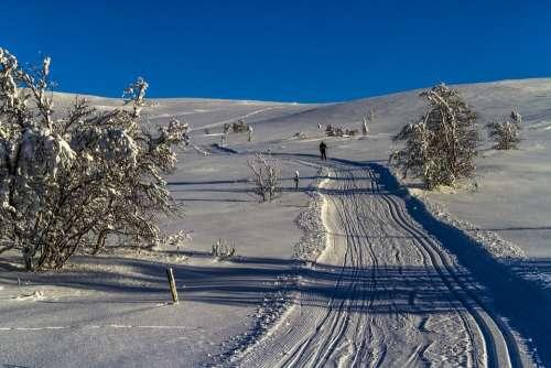 Winter Snow Cold The Ski Trail White Landscape