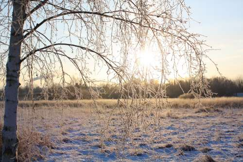 Winter Snow Nature Tree Frost Landscapes