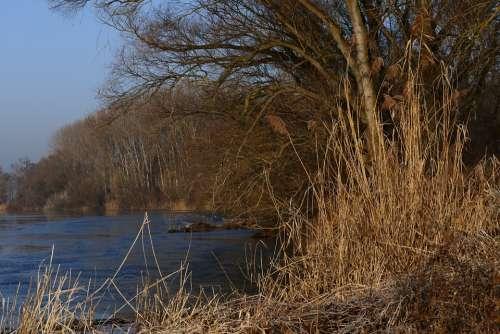 Winter Nature Shore The Danube River Trees