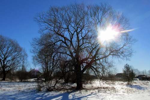 Winter Landscape Sun Snow Nature Cold Sky