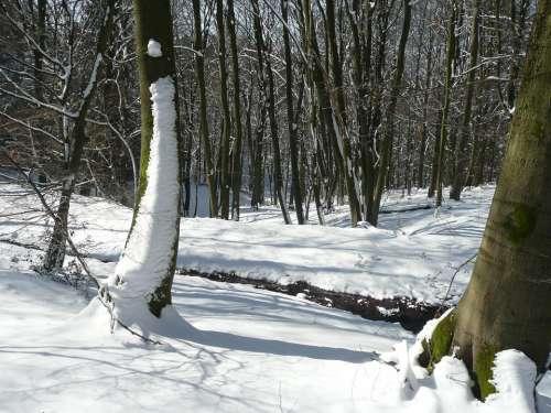 Winter Snow Cold Season Nature Seasonal Forest