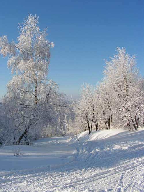 Winter Landscape Trees Forest Snow Mountains