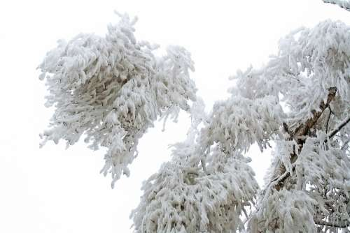 Winter Frozen Icing Whites Frost Cold Tree