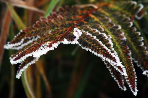 Winter Frozen Icing Whites Frost Cold Bracken