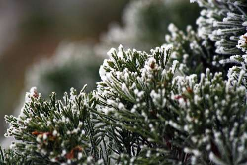 Winter Frozen Icing Whites Frost Cold Branches