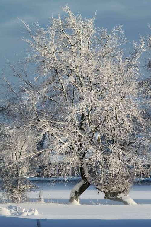 Winter Snow Wintry Snowy Tree Winter Dream