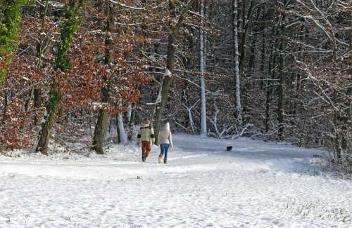 Winter Snow Trees Forest Cold Human Walk