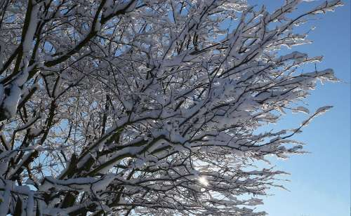 Winter Snow Sun Wintry Trees Nature Cold