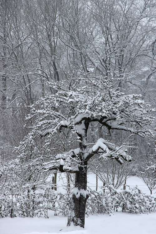 Winter Snow Tree Wintry Cold White Landscape