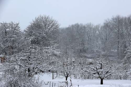 Winter Snow Wintry Cold White Trees Landscape