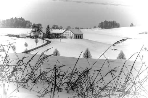Winter Wintry Snow Snowy Landscape Farm