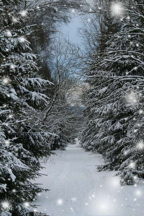 Winter Forest Greeting Card Snow Winter Forest