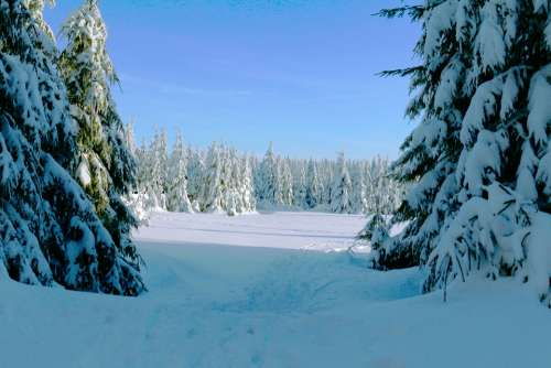 Winter Forest Cold Snow Wintry Forest Winter Magic