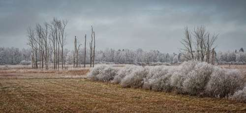 Wintry Spring Lake Bad Buchau Cold Icy Ripe