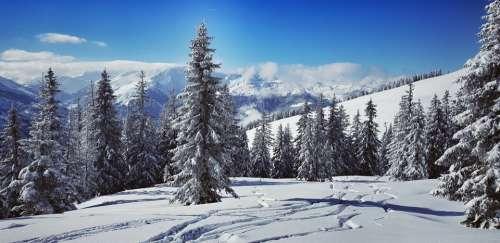 Wintry Skiing Alpine Snowy Sky Forest