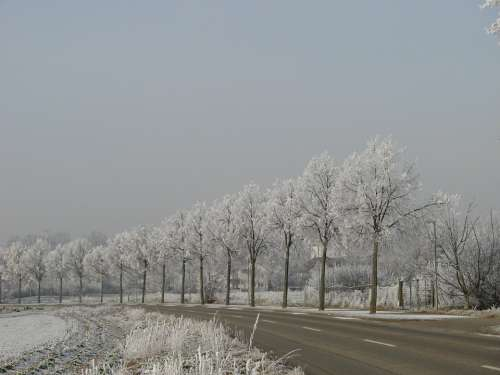 Wintry Hoarfrost Trees Denzlingen