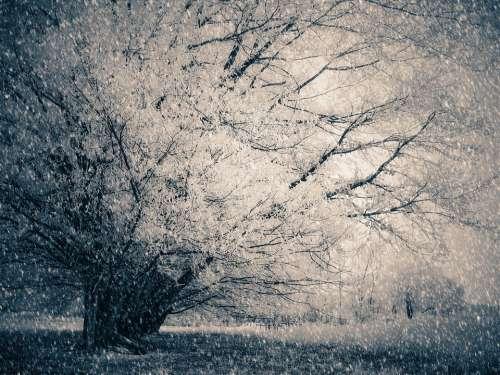 Wintry Snow Tree