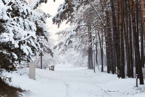 Wintry Way Snowy Way Forest Way Love Story Forest