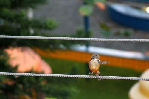 Wise-Orange Blossom Bird Brazilian Observation