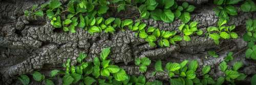 Wood Bark Plants Nature Surface Wild Leaves