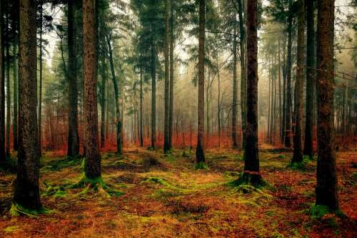 Wood Tree Nature Landscape Forest Autumn Green