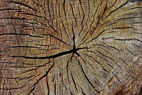 Wood Chopped Cut Year Rings Pattern Texture