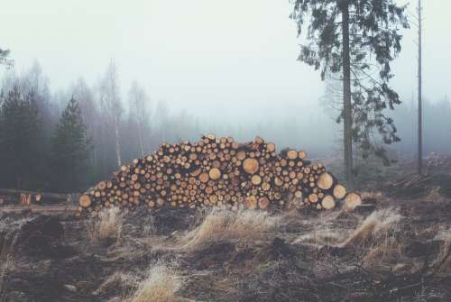 Wood Logs Trunks Forest Stack Wood Pile