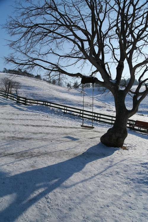 Wood Snow Winter Scenery Swing Landscape Nature
