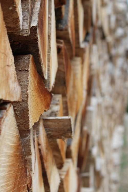 Wood Timber Lumber Close Up Pile Tree Forest
