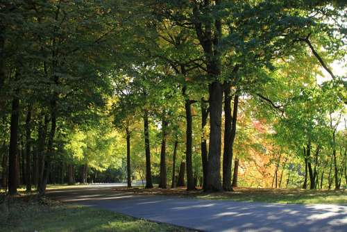 Wood Forest Landscape Scenery Nature Green Road