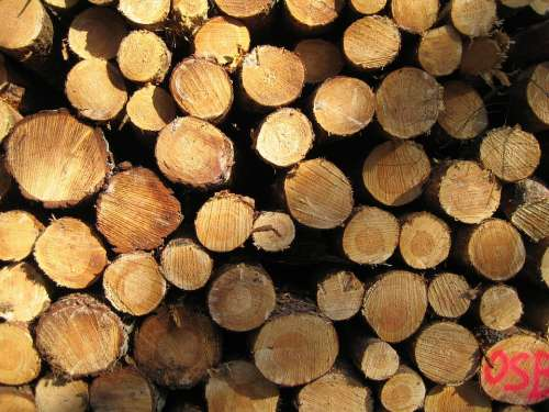 Wood Nature Durable Logging