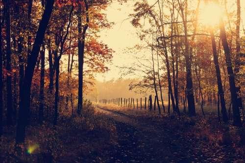 Woodland Path Clearing Sunlight Walk Autumn