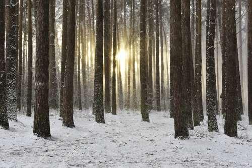Woodland Snow Winter Sunrise Wintry Sunrise