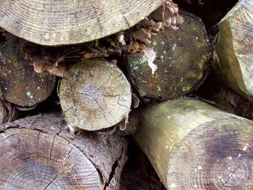Woodpile Logs Trees Timber Forest Stacked Texture