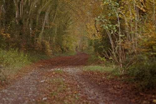 Woods Track Autumn Forest Nature Trees