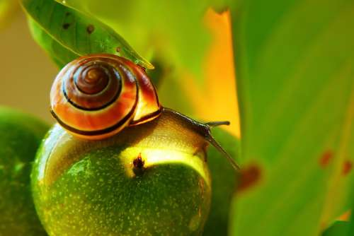 Wstężyk Huntsman Molluscum Mood Fruit Leaf Animals