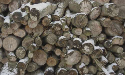 Logs in the winter