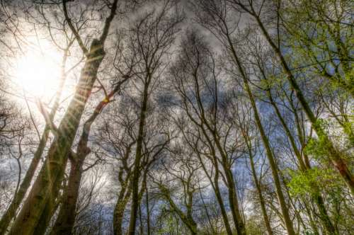 Trees in high dynamic range