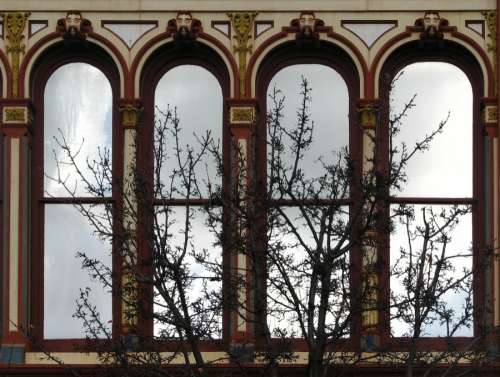 arched windows with tree