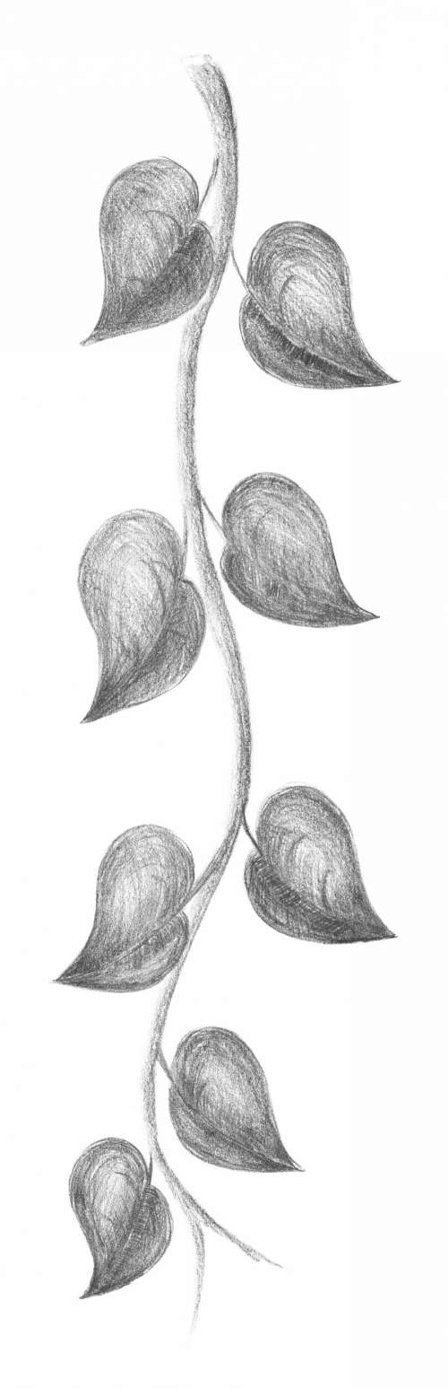 Branch. Pencil sketch. Freehand drawing.