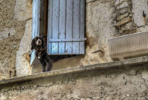 Dog waiting for the boss